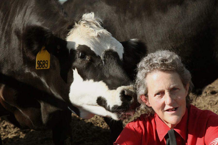 Animal welfare expert Temple Grandin: Creative problem-solving takes visual minds