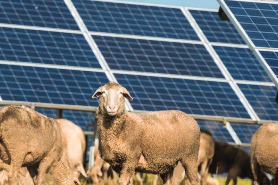 Go-Ahead Given For Maryvale Solar Farm