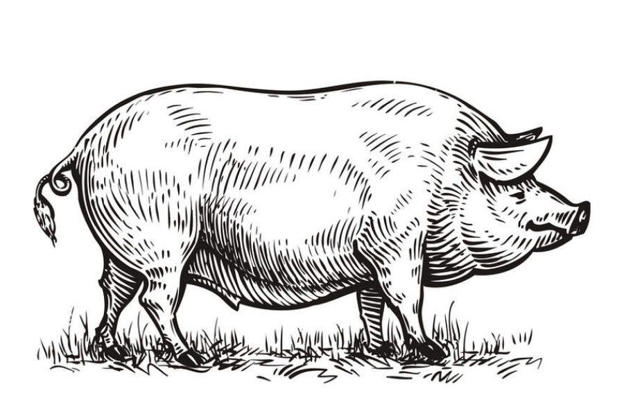 Methane, manure and a net-zero pledge