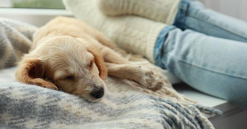 a puppy sleeping on a blanket
